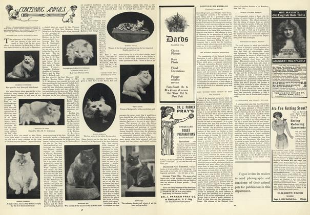 Article Preview: Concerning Animals, January 16 1908 | Vogue