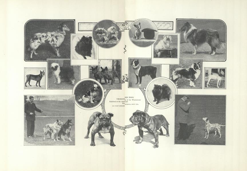 Concerning Animals