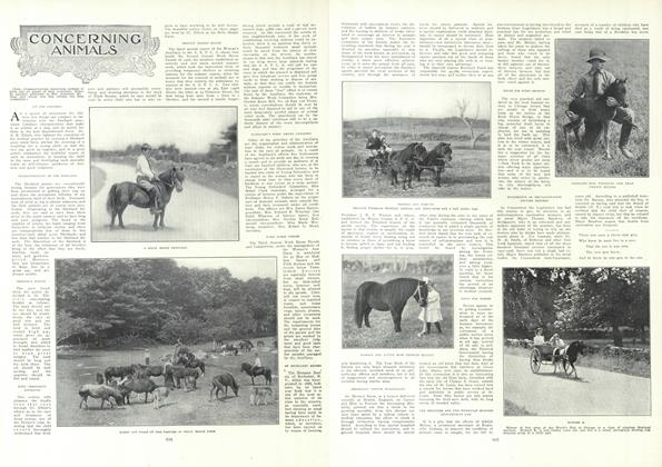 Article Preview: Concerning Animals, May 20 1909 | Vogue