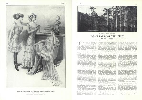 Article Preview: Immortalizing the Birds, June 24 1909 | Vogue