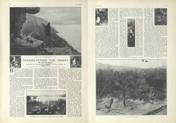 Article Preview: Transplanting the Desert, July 15 1909 | Vogue
