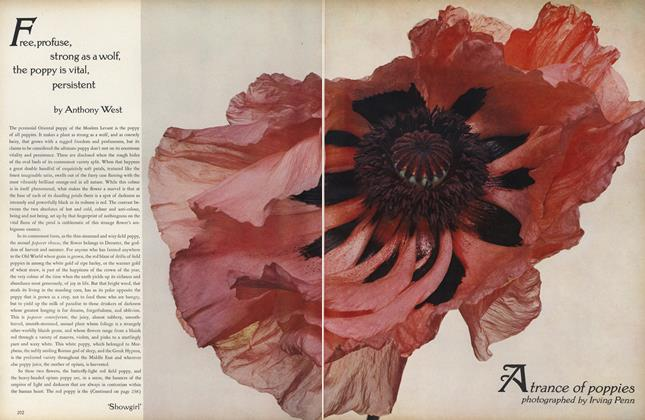 Article Preview: Free, Profuse, Strong as a Wolf, the Poppy is Vital, Persistent, December 1969 | Vogue