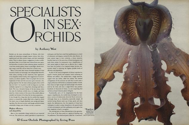 Specialists in Sex: Orchids