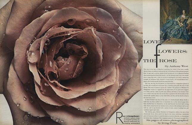 Love Flowers: The Rose