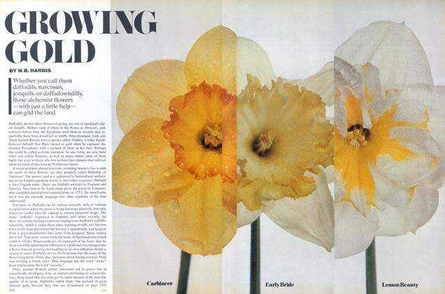Article Preview: Growing Gold, December 1976 | Vogue